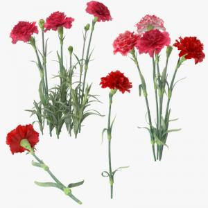carnation collection 3d model turbosquid