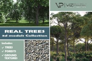 real trees collection 3d models