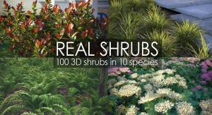 shrubs 3d model vizpark
