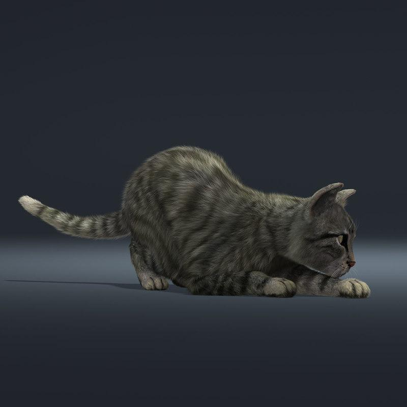 kitty rigged animated 3d model turbosquid