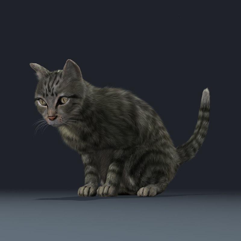 housecat rigged animated 3d model turbosquid
