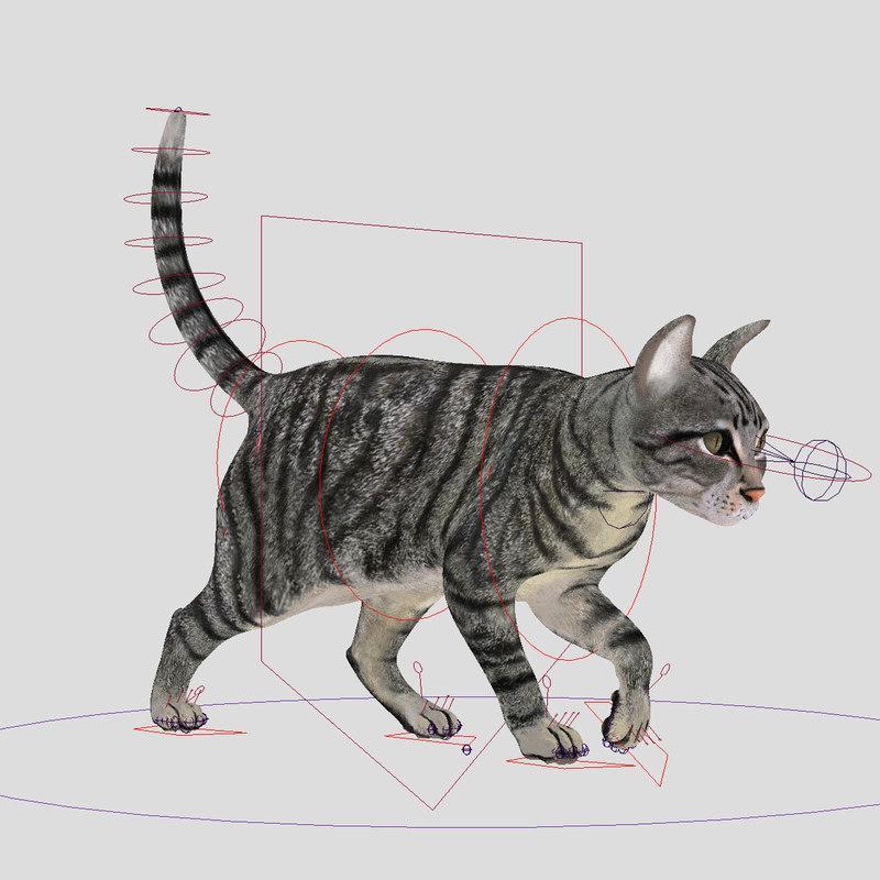 siamese cat animated 3d model turbosquid