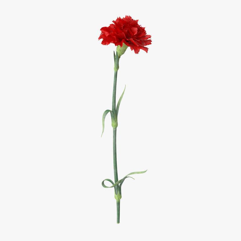 red carnation 3d model turbosquid