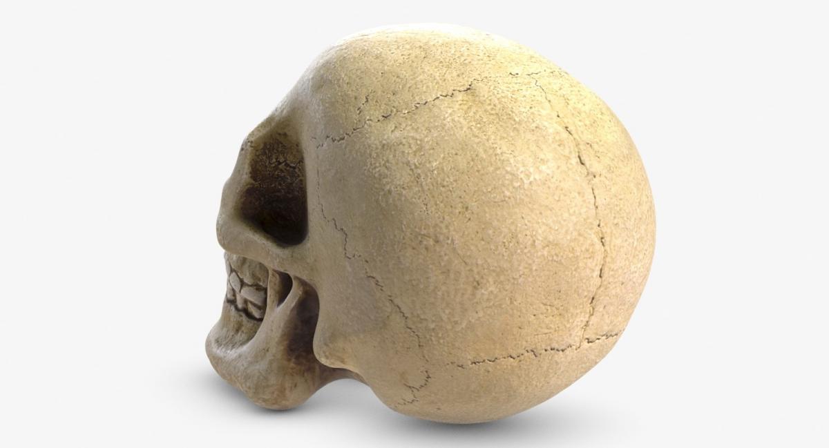 3d model skeleton skull