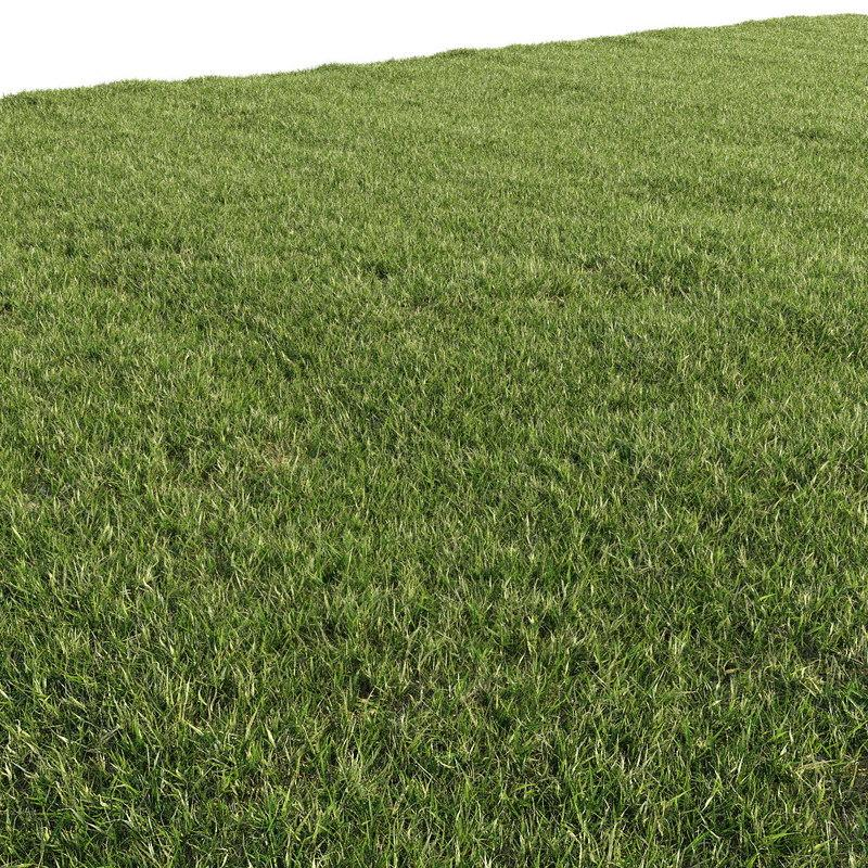 3d model turf grass 3d model turbosquid