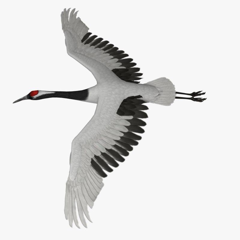 stork bird 3d model turbosquid