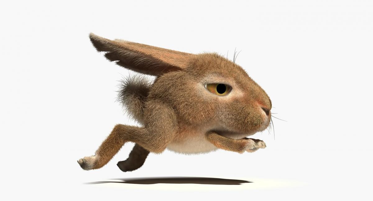 running rabbit 3d model rigged turbosquid