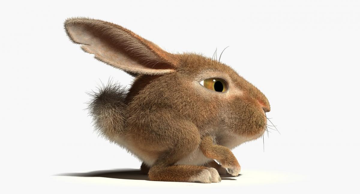 cartoon bunny rigged 3d model turbosquid