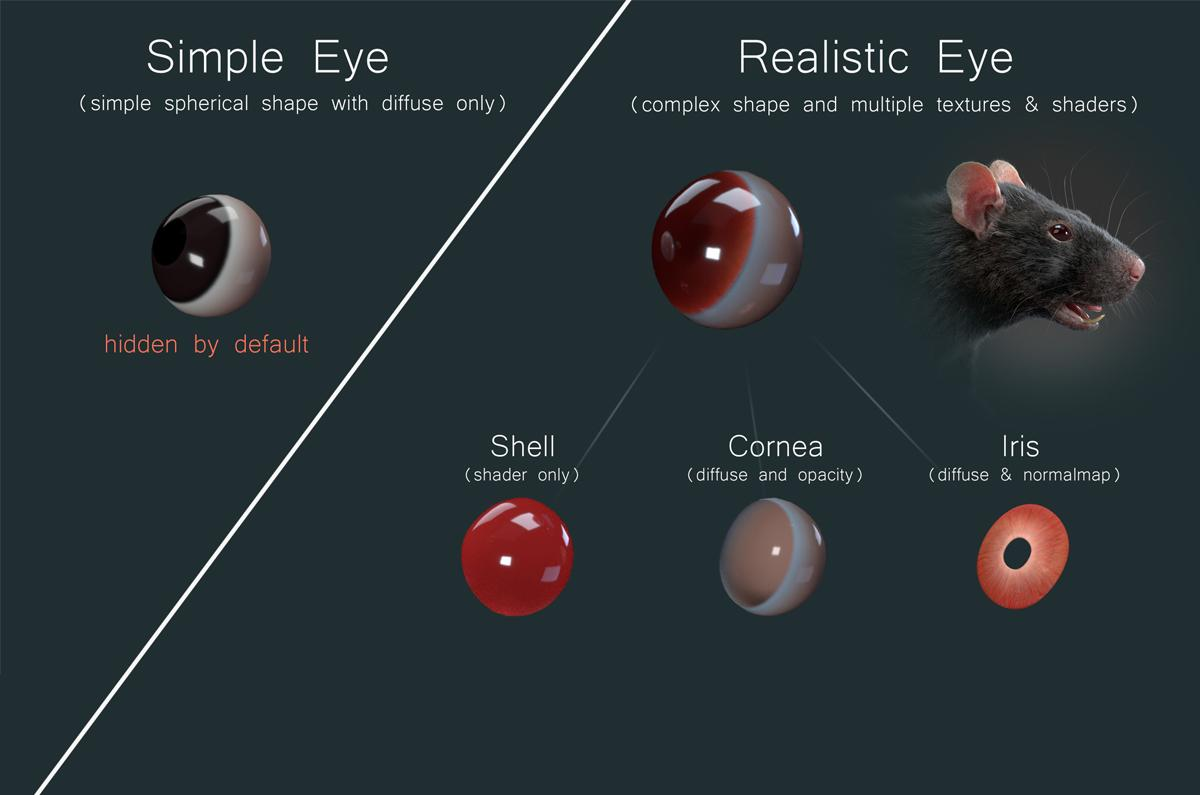 simple and realistic eye of a rat 3d model turbosquid