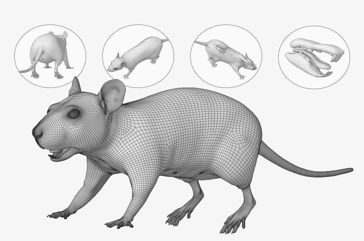 rat 3d model maya and Arnold render
