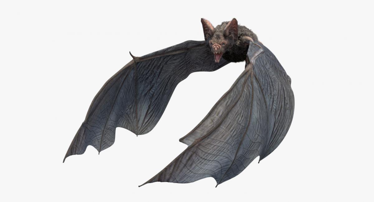 3d model bat