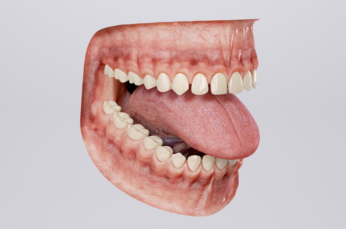 human mouth 3d model turbosquid