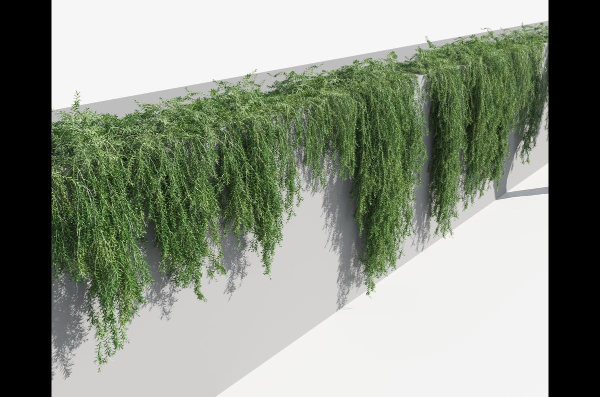 green curtains plant 3d model turbosquid