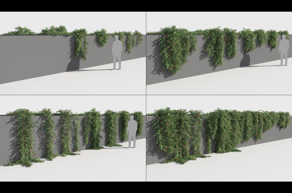 prostrate shrub 3d model turbosquid