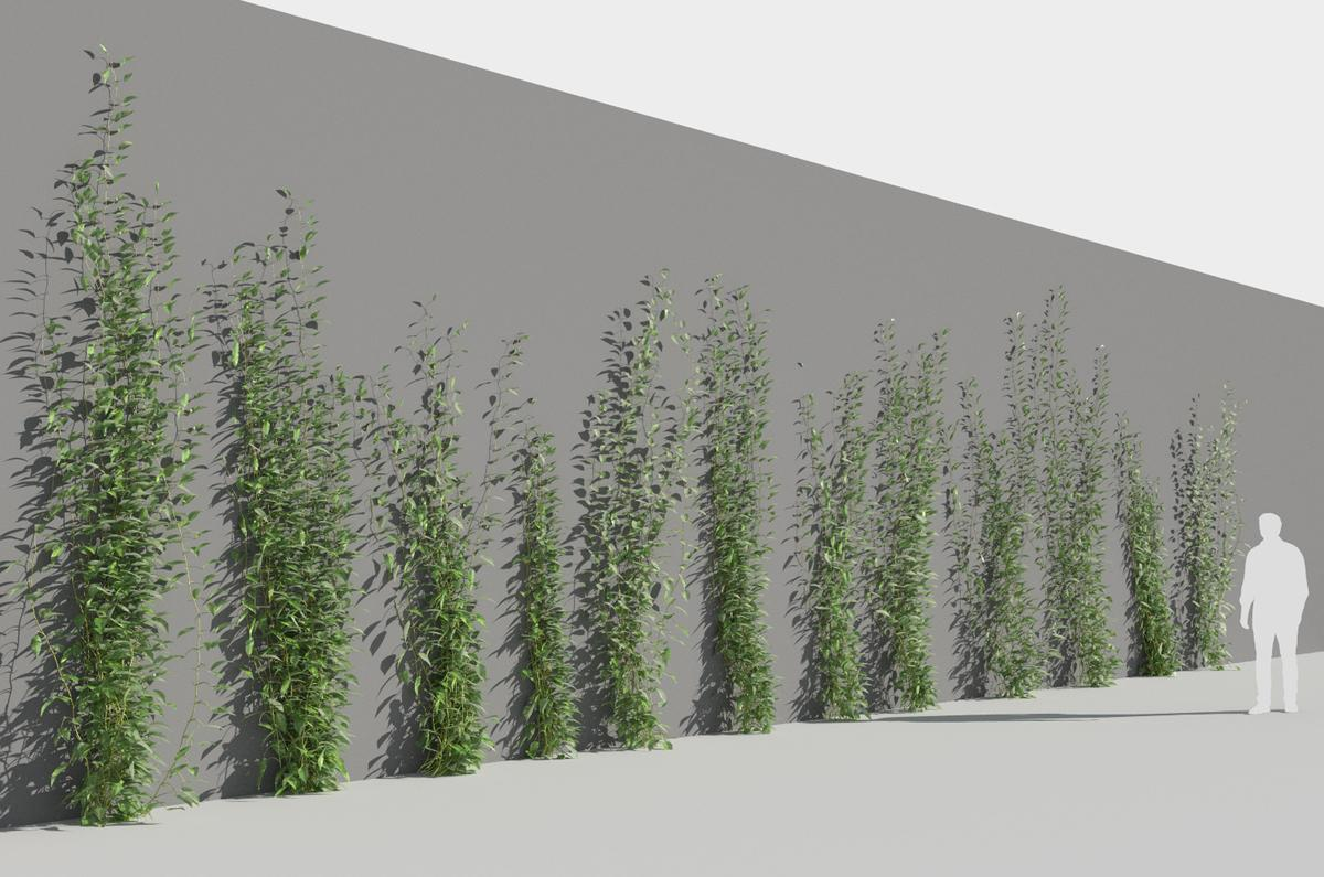 plants growing on walls 3d model turbosquid