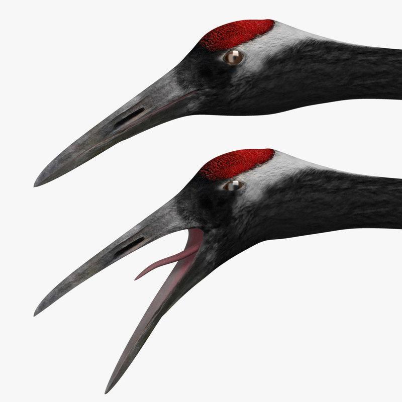 head and upper neck of a crane 3d model turbosquid