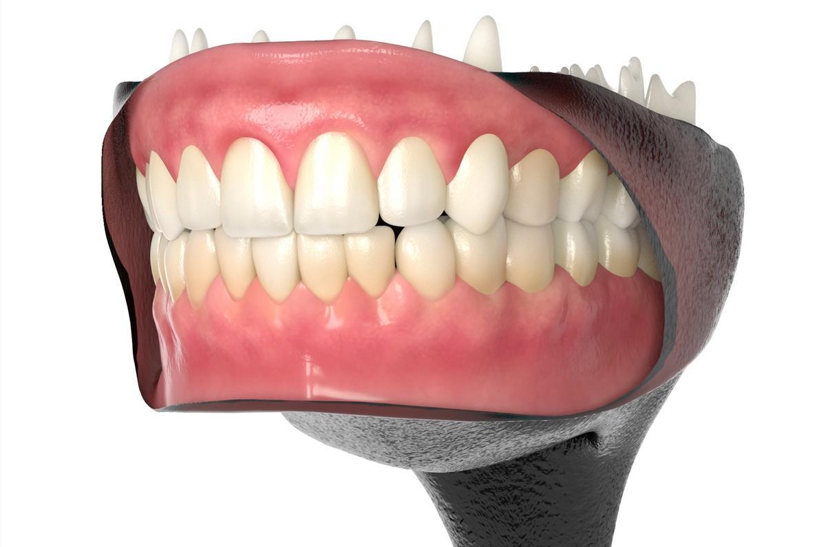human teeth 3d model turbosquid