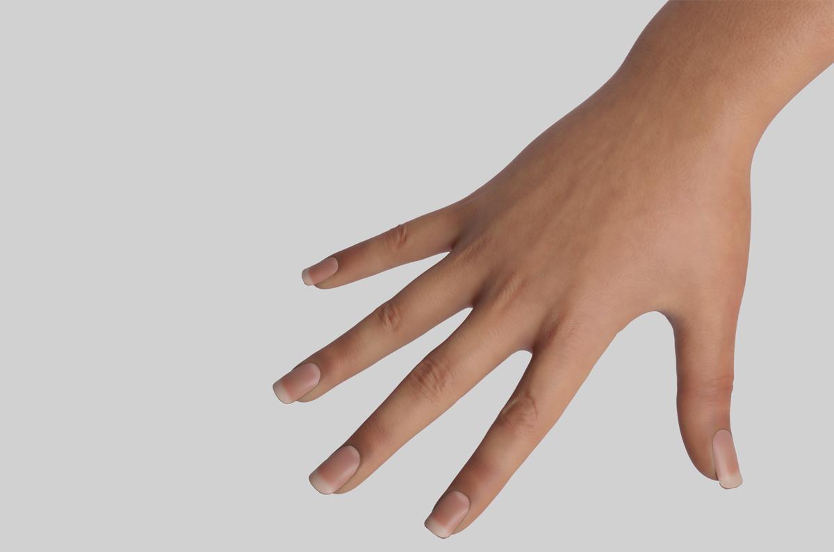 female hand 3d model turbosquid