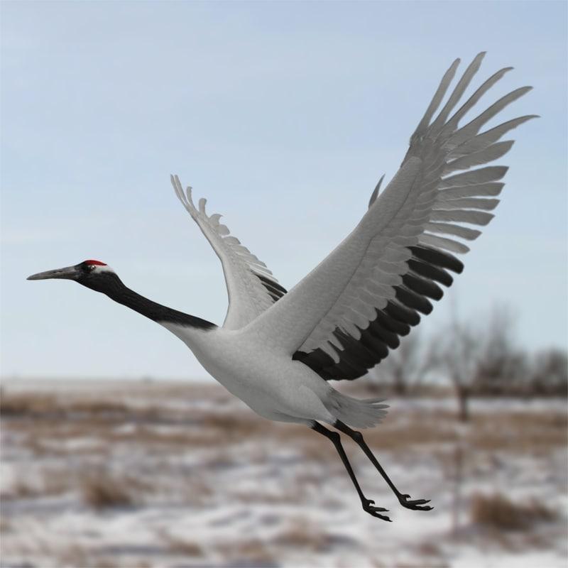 red-crowned crane 3d model turbosquid