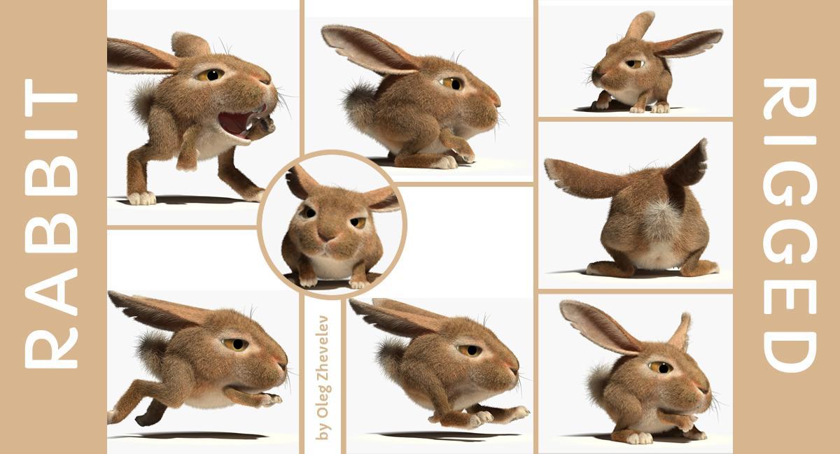 rabbit rigged 3d model turbosquid
