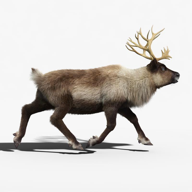 rigged reindeer 3d model turbosquid