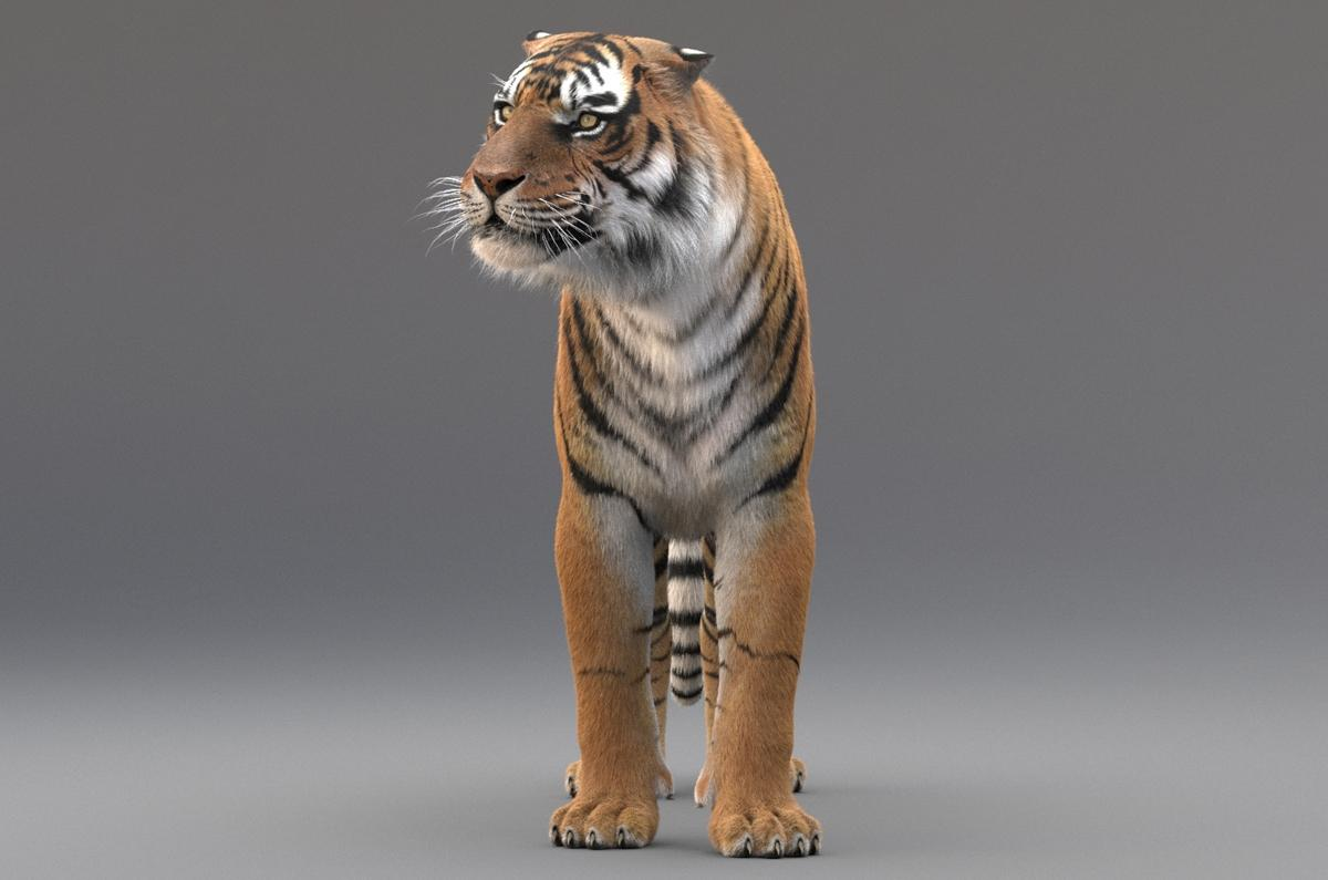 tiger 3d view 3d model turbosquid