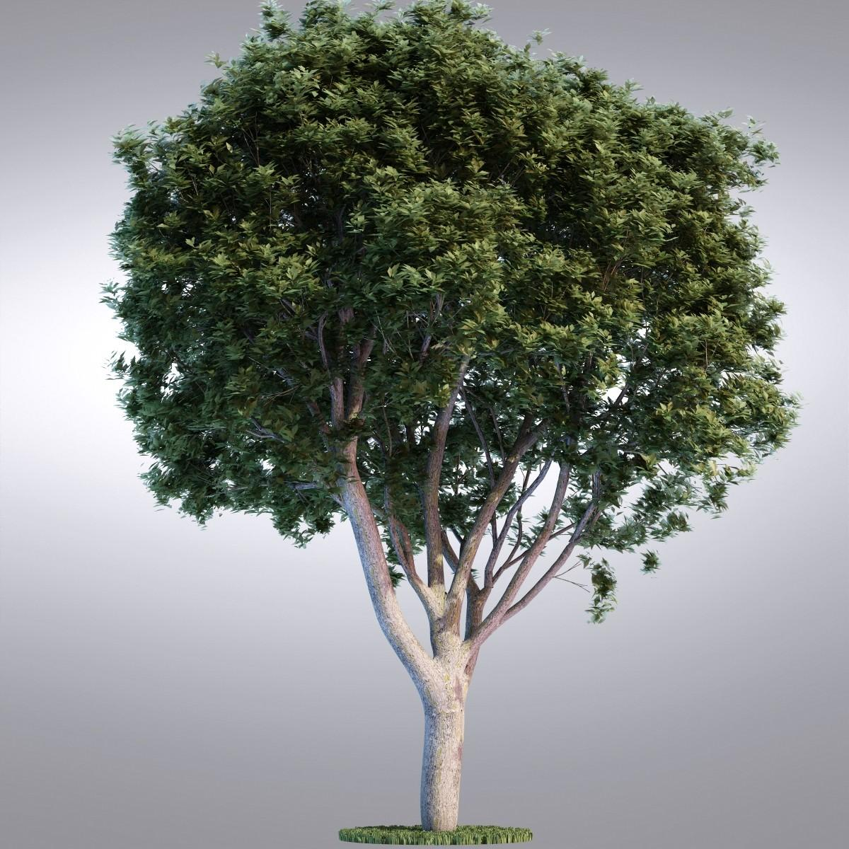 Realistic Trees 3d model | Best Of 3d Models