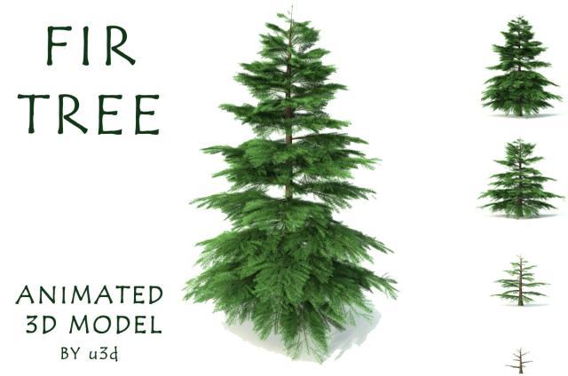 animation of tree growth 3d model 3dexport
