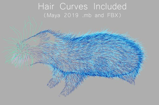 rat hair curves maya 3d model turbosquid