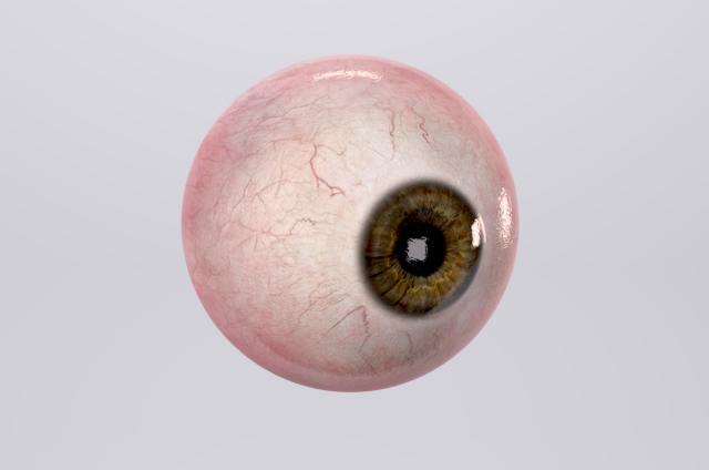 human eye 3d model turbosquid