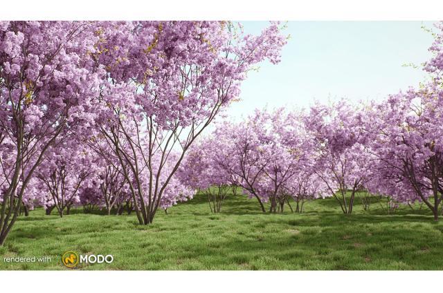 cherry blossom tree 3d model vizpark