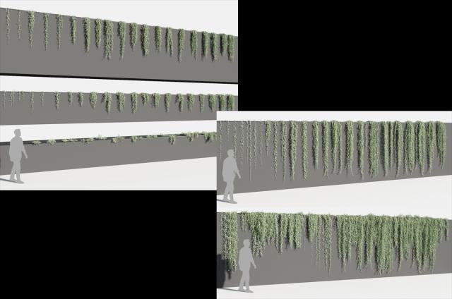 vine plants 3d model turbosquid