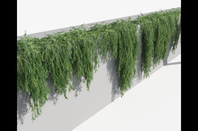green curtains plant 3d model turbosquid