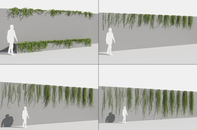evergreen climbing plants 3d model turbosquid