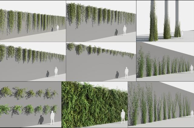 fast growing flowering vines 3d model turbosquid