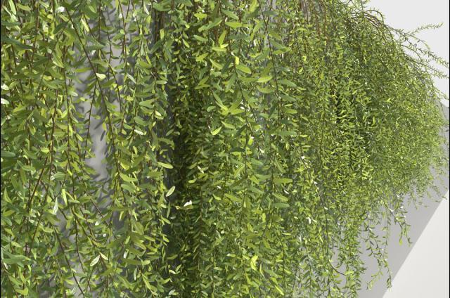 trailing plants for rock walls 3d model turbosquid