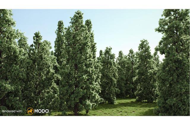 english oak tree 3d model vizpark