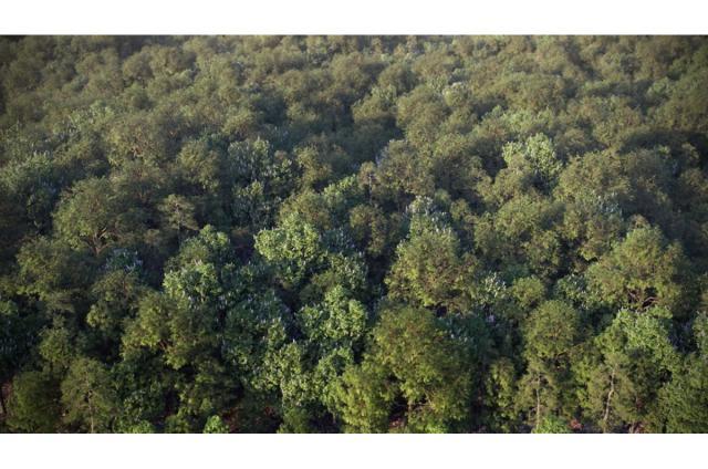 leaves forest 3d model vizpark
