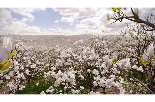 magnolia field forest 3d model vizpark