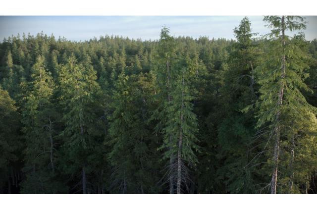 needle tree forest 3d model vizpark
