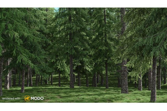 norway spruce tree 3d model vizpark