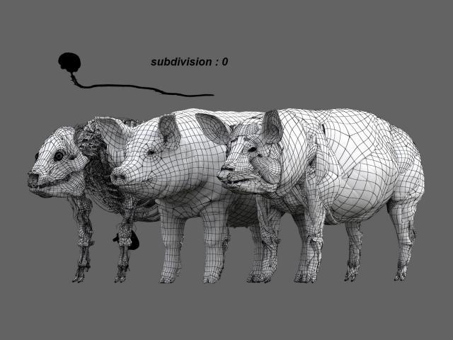 pig anatomy maya zbrush 3d model turbosquid