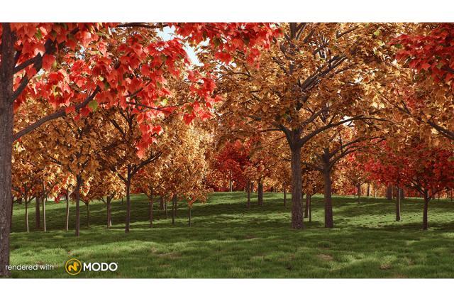 red maple tree 3d model vizpark