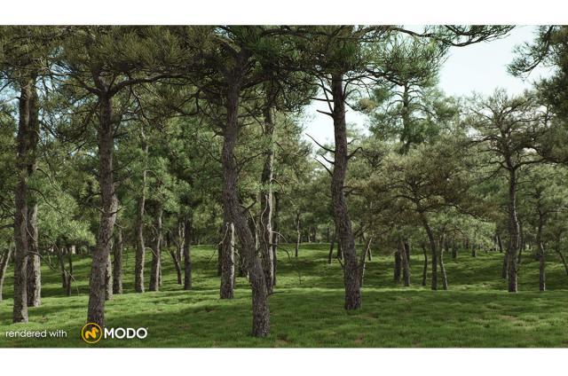 scots pine tree 3d model vizpark