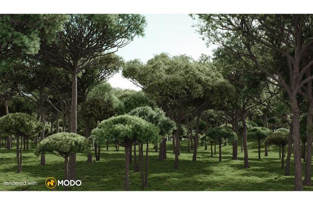 stone pine tree 3d model vizpark