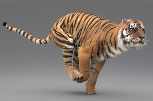 tiger running 3d model rigged turbosquid