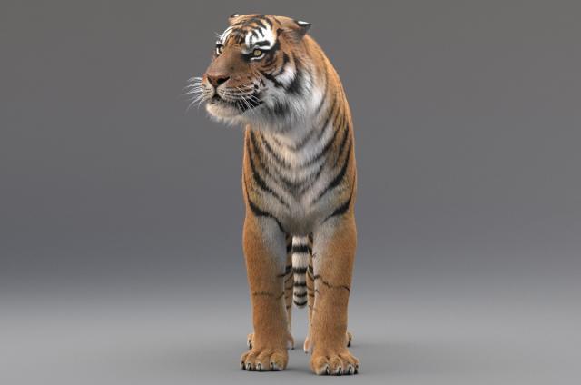 tiger 3d view 3d model turbosquid