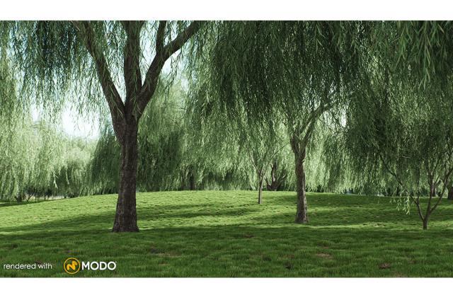weeping willow tree 3d model vizpark