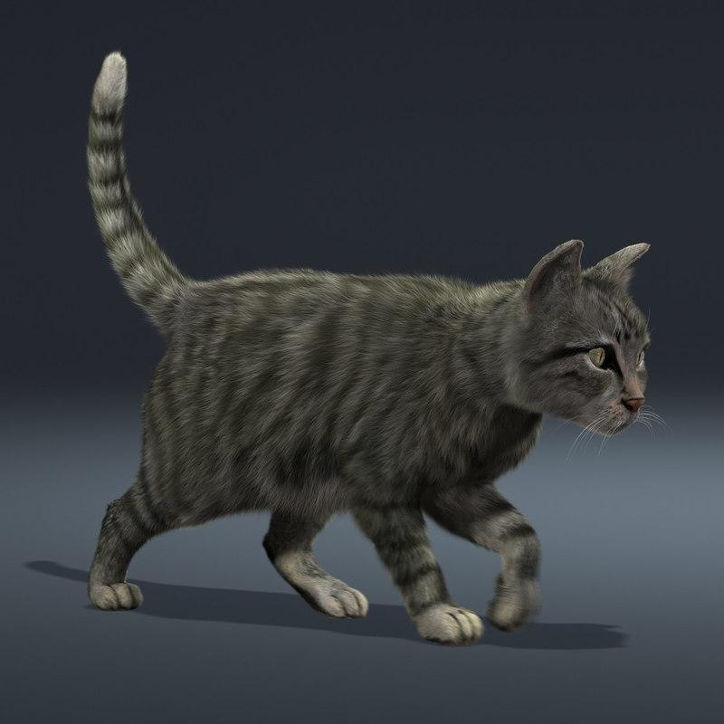 cat rigged and animated 3d model turbosquid