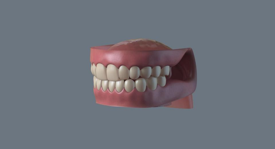 human teeth 3d model turbosquid
